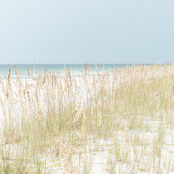 Photo of dune grass and sea oats in Pensacola Beach Florida. Pensacola Beach is a coastal city in the Emerald Coast area of the Southeastern United States. Photo is high resolution. Copyright ⓒ 2018 Paul Velgos with All Rights Reserved.
