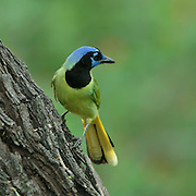 Texas Birding