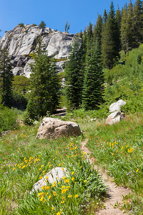 """Trail Among the Wildflowers 1"" - This hiking trail surrounded by wildflowers was photographed near Paradise Lake, California."