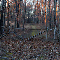 https://Duncan.co/blocked-path-in-the-woods