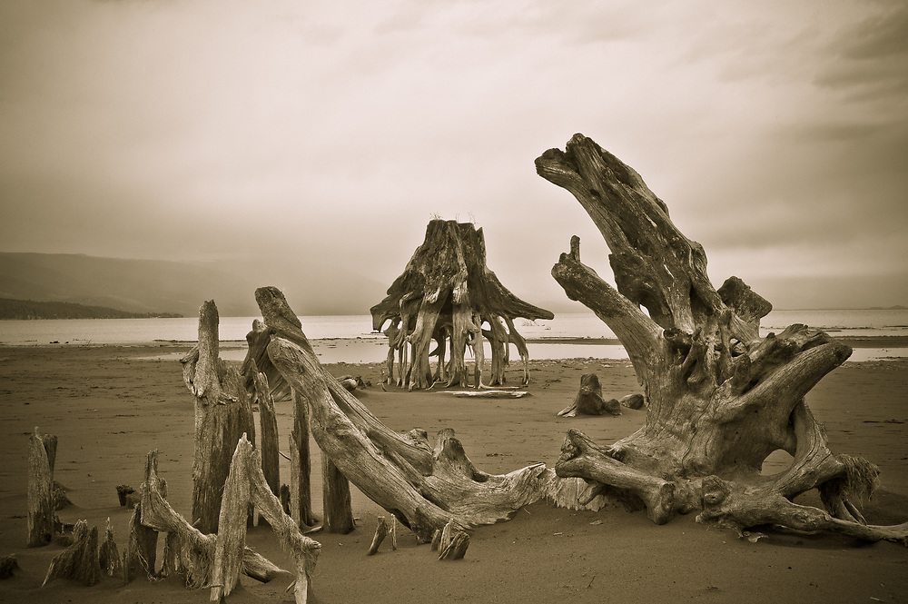 Landscapes of beach at Flathead Lake with Giger-like tree roots resembling whale bones