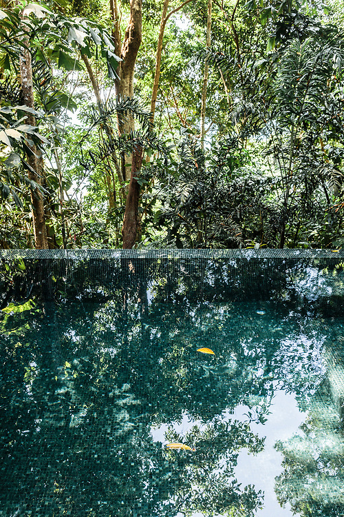 Jungle reflected in villa swimming pool
