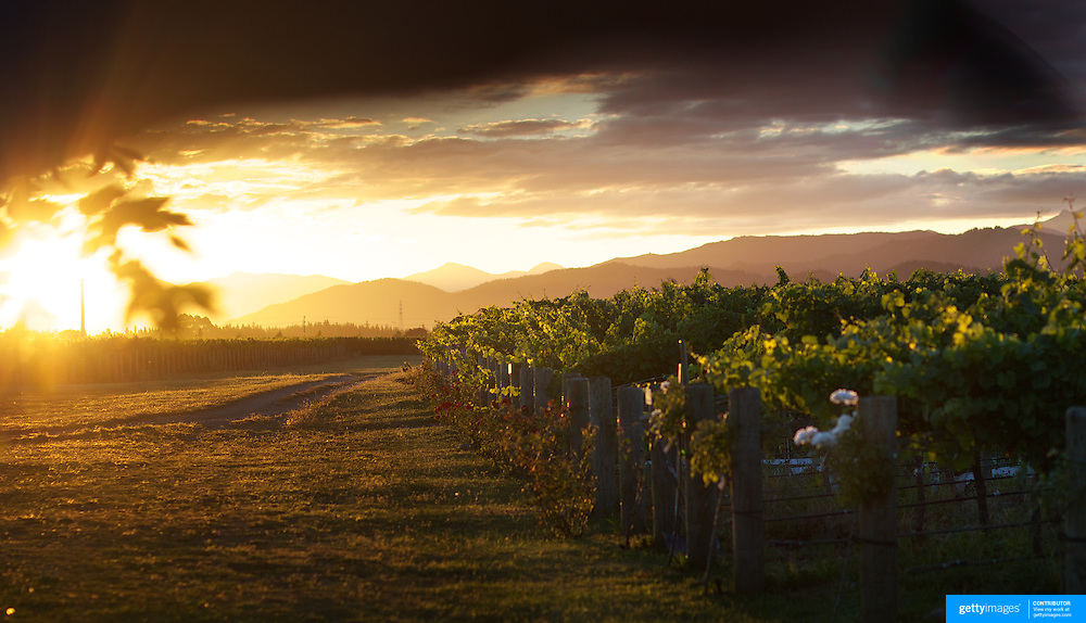 Sweeping views of vineyards at sunset with a stunning mountain range back drop in the Marlborough Wine Region, Blenheim,  South Island of New Zealand..The Marlborough wine region is New Zealand's largest wine producer. The Marlborough wine region has earned a global reputation for viticultural excellence since the 1970s. It has an enviable international reputation for producing the best Sauvignon Blanc in the world. It also makes very good Chardonnay and Riesling and is fast developing a reputation for high quality Pinot Noir. Of the region's ten thousand hectares of grapes (almost half the national crop) one third are planted in Sauvignon Blanc. .Free draining soils and warm growing conditions mean the South Island region is perfectly suited to wine production. Producing a full range of wine varieties, Marlborough turns out arguably the best Sauvignon Blanc in the world. Most Marlborough vineyards are found around the main centre of Blenheim,  with dry mountains rising up behind, Marlborough, New Zealand, 10th February 2011. Photo Tim Clayton