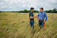 Cattle on Native Forage test and demonstration at west range of OSU. Alex Rocateli and Dave Lalman working together to develop grazing tools and techniques for cattle producers.