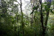 Jungle & Forest Landscapes
