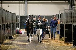 Veeze Bart, NED, Daily Diamond <br /> KWPN Stallion Show 2019<br /> © Hippo Foto - Sharon Vandeput<br /> 1/02/19