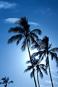 Palm trees silhouetted against the sun