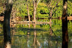 AUSTRALIA QUEENSLAND BILLABONG 23FEB08 - Birds nest at the Billabong Sanctuary...jre/Photo by Jiri Rezac..© Jiri Rezac 2008..Contact: +44 (0) 7050 110 417.Mobile:  +44 (0) 7801 337 683.Office:  +44 (0) 20 8968 9635..Email:   jiri@jirirezac.com..Web:    www.jirirezac.com..© All images Jiri Rezac 2008 - All rights reserved.