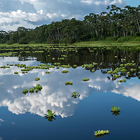 Clouds are reflected on the calm surface of the Yanayacu River in the headwaters of the Amazon River in Peru's Pacaya-Samiria National Reserve.