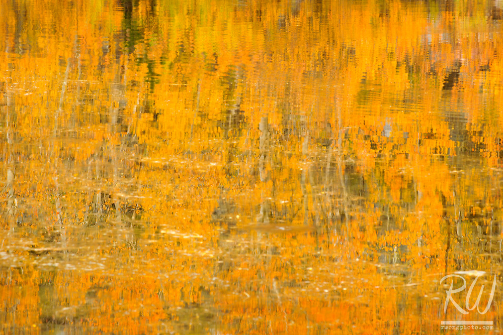 North Lake Fall Colors Water Abstract, Inyo National Forest, California