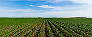 23 June 2011- Greg Nuttleman's Farm in Stomsburg, Nebraska is photographed for FMC Authority.