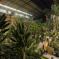 Train Station interior with jungle in the old section of the Estación de Atocha, Madrid, Spain, Europe.