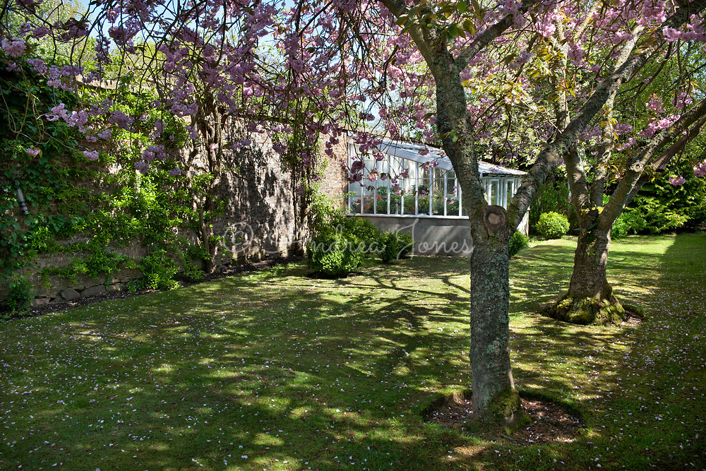The Glass House and flowering cherry trees near the Dog Gate of the Walled Garden. Gallery, Angus, Scotland