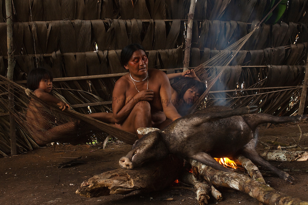 Huaorani Indian Dete Ikeka burning the hair off of a peccary before cutting it up to either boil or smoke it.<br /> Bameno Community. Yasuni National Park.<br /> Amazon rainforest, ECUADOR.  South America<br /> This Indian tribe were basically uncontacted until 1956 when missionaries from the Summer Institute of Linguistics made contact with them. However there are still some groups from the tribe that remain uncontacted.  They are known as the Tagaeri & Taromenane. Traditionally these Indians were very hostile and killed many people who tried to enter into their territory. Their territory is in the Yasuni National Park which is now also being exploited for oil.