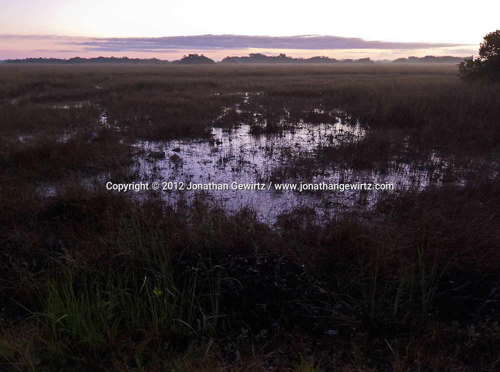 Fog lifts at dawn over a flooded part of the sawgrass prairie in the Shark Valley section of Everglades National Park, Florida. WATERMARKS WILL NOT APPEAR ON PRINTS OR LICENSED IMAGES.