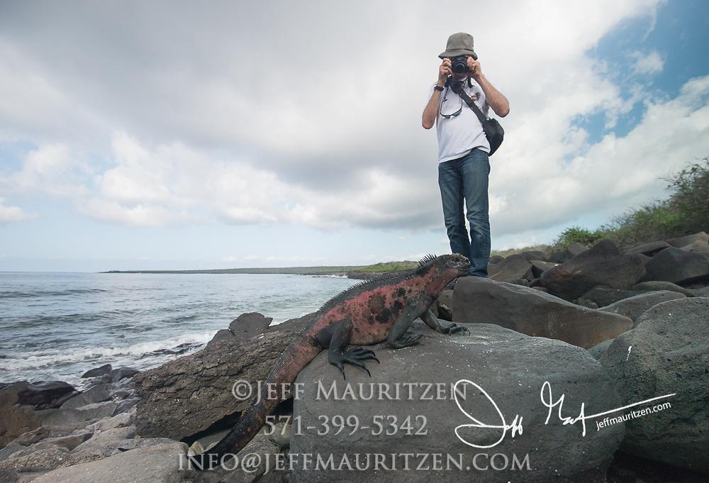 A tourist photographs a marine iguana on Espanola island, part of the Galapagos islands of Ecuador.