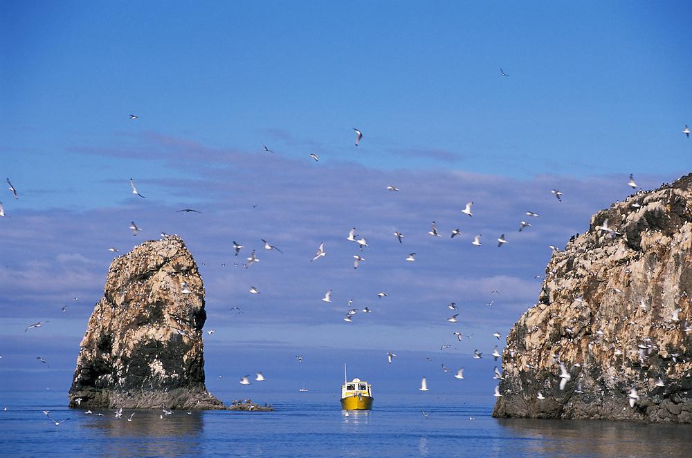 Gull Island, Kachemak Bay near Homer, Alaska, USA