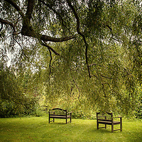 Tranquil countryside location with garden seating under a shady tree