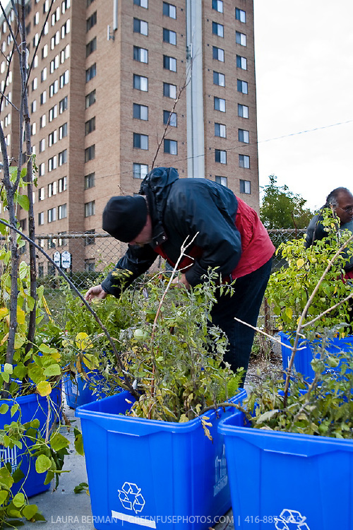 Community container garden at Weston Rd and Lawrence Ave. Toronto