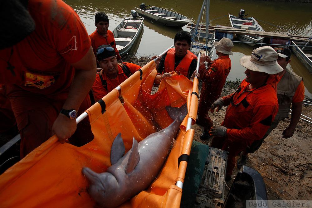 Biologists, rescue workers and fishermen rescue a pink dolphin at the Pailas river near Las Londras farming complex, Santa Cruz, Bolivia, Tuesday, Aug. 24, 2010.(Hilaea Media/Dado Galdieri).