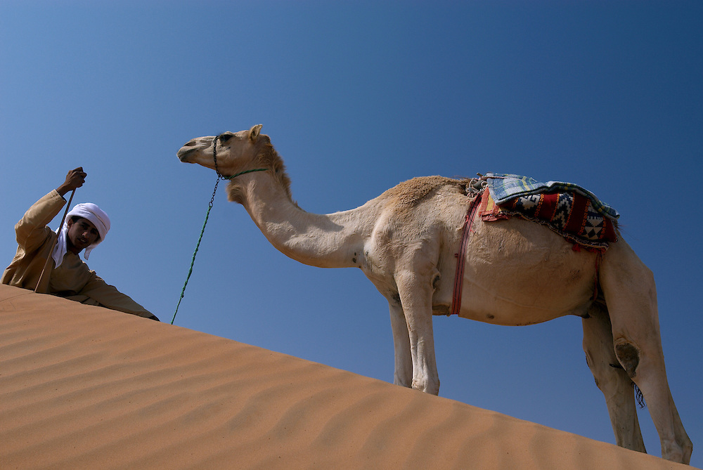 """Oman, Wahiba Sands. January/25/2008...Sometimes refered to as """"ships of the desert"""", camels prove an invaluable means of transportation in a desert environment where a sure foot means survival."""