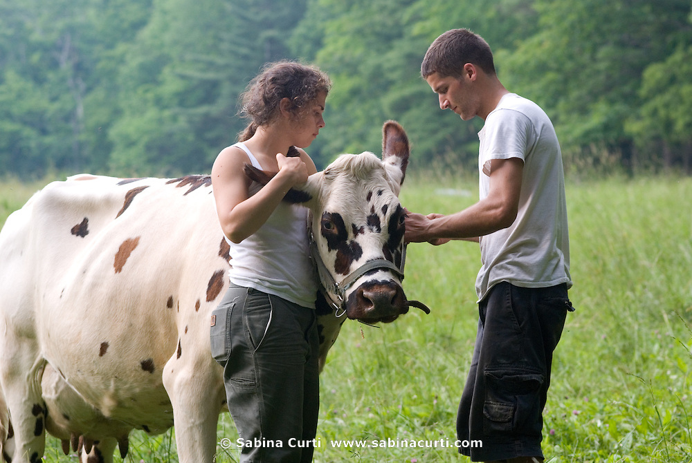 Summer interns prepare to take Brie to the barn for milking, on Moon in the Pond farm in Sheffield, MA