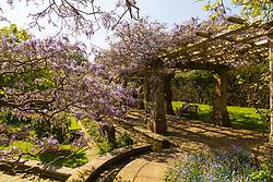 The wisteria pergola in the tranquil Stoke Poges Memorial garden. Stoke Poges, Buckinhamshire, May 06 2018.