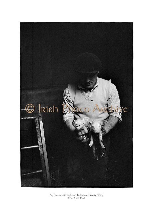 Farmer with Piglets, Tullamore, County Offaly.<br /> <br /> 22nd April 1968<br /> 22/04/1968
