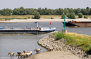 Nederland, Nijmegen, 2-8-2018 Door de aanhoudende droogte hebben mens en natuur het moeilijk . Doordat regenval uitblijft worden de waterbuffers kleiner . Waterstand in de Waal is laag, maar kan nog bevaren worden . Schepen moeten minder lading innemen om niet te diep te komen . Hierdoor is het drukker in de smallere vaargeul.Foto: Flip Franssen
