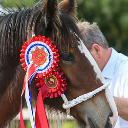 North West & Wales Shire Foal Society Show 2019