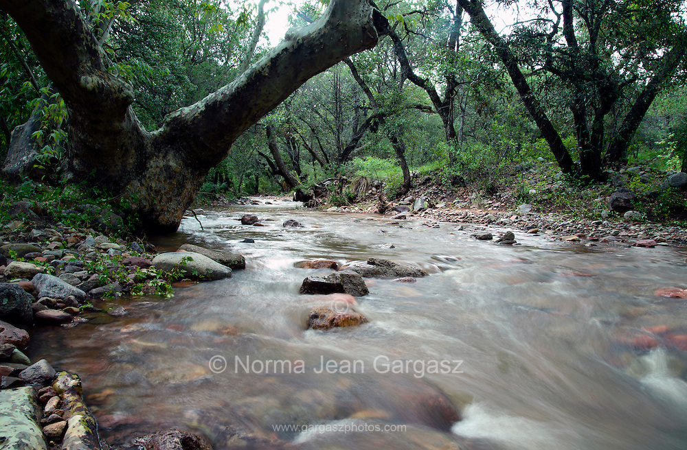 Seasonal monsoon flow fills Cave Creek in the foothills of the Santa Rita Mountains, Cave Canyon, Gardner Canyon, Coronado National Forest, Sonoita, Arizona, USA.