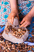 Close up of the hands of mother and daughter Layla and Hanane shelling argan nuts to produce argan oil at their farm home in Agouni n Fad village near Aoulouz, Taliouine & Taroudant Province, Souss Massa Draa region of Southern Morocco, 2016-05-24. <br />