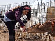 Vivian makes  a friend at Point Reyes Farmstead