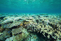 Diverse corals in the Clerke Channel at the Rowley Shoals.