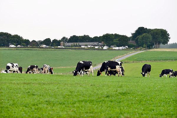 Nederland, Groesbeek, 29-6-2014Een melkveebedrijf. Koeien staan in de wei, het weiland. Op de achtergrond de boerderij met een camping erbij.Kamperen,vakantie, bij de boer.Foto: Flip Franssen/Hollandse Hoogte