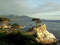 Lone Cypress Tree on 17 Mile Drive, Pacific Grove, California