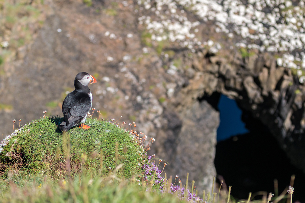 The isle of Staffa has many puffins. This is the one arch however.  Staffa is the home of Finnigal's cave.