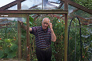 An elderly pensioner gentleman stands surrounded by a summer crop of tomatoes growing in his greenhouse.