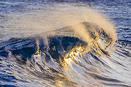 Late sunlight shoots under a breaking wave, glistening on the smooth accelerating water, © 2010 David A. Ponton