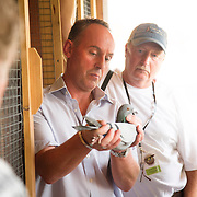 Mark Evans and partner John Marles look at a selection of their racing pigeons in the loft in Spring Hill, Fl., on Friday, November 22, 2013. Photo by David Stephenson
