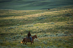 """The Nature Conservancy's Matador Ranch worker Jason Hanlon herds with ranching families in Eastern Montana  at the Matador ranch """"grass bank"""". The """"grass bank"""" is an innovative way to leverage conservation gains, in which ranchers can graze their cattle at discounted rates on Conservancy land in exchange for improving conservation practices on their own """"home"""" ranches. In 2002, the <br /> Conservancy began leasing parts of the ranch to neighboring ranchers who were suffering from  severe drought, offering the Matador's grass to neighboring ranches in exchange for their  participation in conservation efforts. The grassbank has helped keep ranchers from plowing up native grassland to farm it; helped remove obstacles to pronghorn antelope migration; improved habitat for the Greater Sage-Grouse and reduced the risk of Sage-Grouse colliding with fences; preserved prairie dog towns and prevented the spread of noxious weeds. (Photo By Ami Vitale)"""