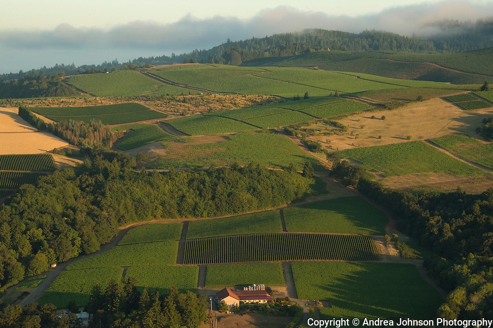 Aerial view over Cristom estate vineyards, Eola-Amity Hills, Willamette Valley, Oregon