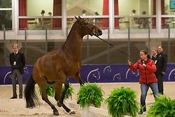 Werth Isabell (GER) - Don Johnson 14 <br /> Reem Acra FEI World Cup Goteborg 2013<br /> © Dirk Caremans