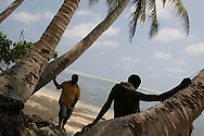 Surveying the coconut trees, with their roots exposed by the sea, on Han Island, Carteret Atoll, Papua New Guinea, on Sunday, Dec. 10, 2006. Rising sea levels have eroded much of the coastlines of the low lying Carteret islands (situated 80km from Bougainville island, in the South Pacific), and waves have crashed over the islands flooding and destroying what little crop gardens the islanders have. Food is in short supply, banana and swamp taro crops are failing due to the salt contamination of the land, and the islanders live on a meagre one meal per day diet of fish and coconut. There is talk by the Autonomous Region of Bougainville government to relocate the Carteret Islanders to Bougainville island, but this plan is stalled due to a lack of finances, resources, land and coordination.