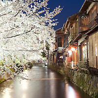 Blossoms in Kyoto, Japan