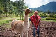 Alpaca, Farm, Sacred Valley, Cusco Region, Urubamba Province, Machupicchu District, Peru
