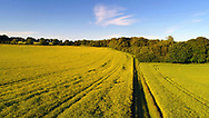 Agricultural field, Test Valley, Hampshire