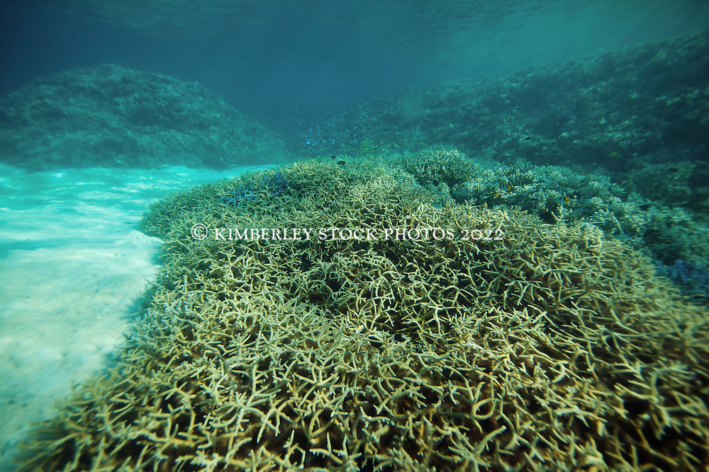 Bleached corals in the Clerke  Lagoon at the Rowley Shoals.