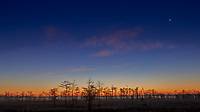 Big Cypress Swamp at Dawn. Image taken with a Nikon D800 camera and 14-24 mm f/2.8 lens (ISO 100, 24 mm, f/8, 25 sec). Raw image processed with Capture One Pro 7.