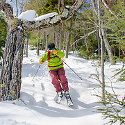 Tree Skiing, Glades